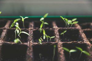 Les bulbes et semences
