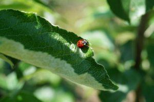 Les produits bio et traitements naturels